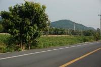 Khao Mai Kaeo 92314