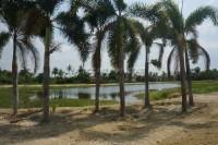 Private Lake  92648